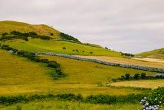 Het landschap van Pastrue, Sao Jorge Stock Fotografie