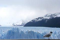 Het Landschap van Patagonië, zuiden van Argentinië stock fotografie