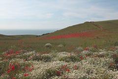 Het landschap van Picardie #2 Stock Afbeelding
