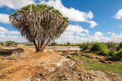 Het landschap van Savana in Afrika. Royalty-vrije Stock Fotografie