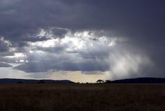 Het landschap van Serengeti bij schemer Stock Afbeelding