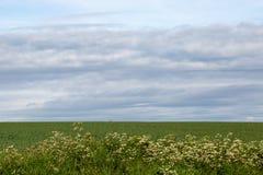 Het landschap van Sussex Stock Afbeeldingen
