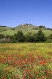 Het landschap van Toscanië met wijngaard in de lente Stock Foto