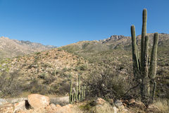 Het Landschap van Tucson stock foto