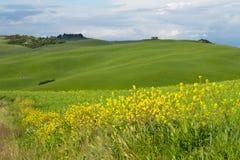 Het landschap van Val D 'Orcia: gele raapzaadgebieden en groene weiden, Toscanië royalty-vrije stock afbeeldingen