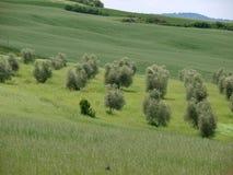 Het landschap van Val-d'Orcia. royalty-vrije stock afbeeldingen
