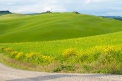 Het landschap van Val D ?Orcia: gele raapzaadgebieden en groene weiden, Toscani? stock afbeelding