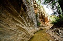 Het landschap van Versmalt stijging in Zion National Park. Stock Afbeeldingen