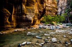Het landschap van versmalt stijging in Zion National Park. Royalty-vrije Stock Afbeeldingen