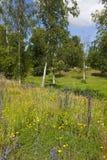 Het landschap van weiden stock afbeeldingen