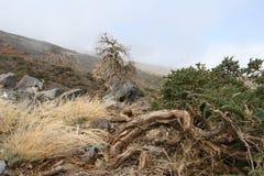 Het landschap van Wilde royalty-vrije stock foto's