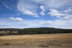 Het Landschap van Yellowstone Stock Foto's