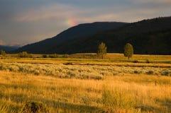 Het landschap van Yellowstone in het avond licht Stock Fotografie