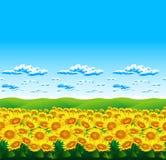 Het landschap van zonnebloemen in de zomer Stock Afbeeldingen