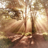 Het landschap van zonstralen Stock Afbeeldingen