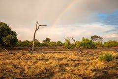 Het landschap van Zuid-Afrika met een regenboog Royalty-vrije Stock Afbeelding