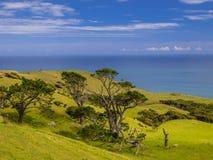 Het landschaps groene heuvels van Nieuw Zeeland met overzees stock foto's