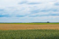 Het landschaps veelvoudige kleuren van het tarwegebied Stock Afbeelding