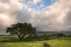Het landschapspanorama van het platteland Royalty-vrije Stock Afbeeldingen