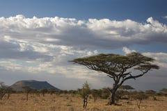 Het landschapsserengeti van Afrika Stock Afbeeldingen