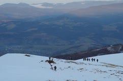 Het landschapsvoetafdrukken van de Carpatianwinter in de sneeuw Stock Fotografie