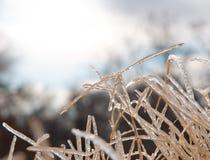 Het lange gras van de Bermudas dat in een stevige laag van ijs wordt behandeld Stock Foto's