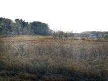 Het Lange Gras van het land Royalty-vrije Stock Afbeelding