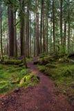 Het lange mos behandelde bomen met donkergroen mos aan de kanten van een sleep die afwisselend in de afstand in Hoh Rain winden stock foto