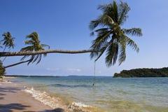 Het lange strand met kokosnoot tre Stock Afbeeldingen