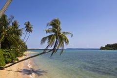 Het lange strand met kokospalm Royalty-vrije Stock Afbeeldingen