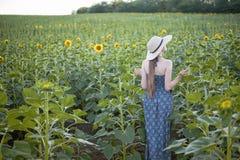 Het langharige meisje in een hoed en een kleding bevindt zich met zijn rug tegen de achtergrond van een bloeiend zonnebloemgebied stock fotografie