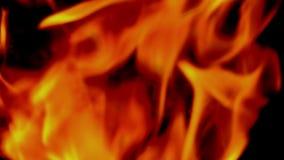 Het langzame de motie van de vlambrand branden op zwarte achtergrond stock footage