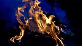 Het langzame de motie van de vlambrand branden op zwarte achtergrond stock video