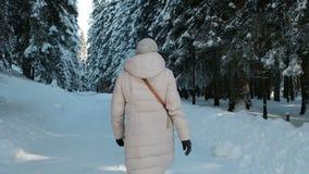 Het langzame schieten van achtervrouw in het bos van de de winterpijnboom met sneeuw stock video