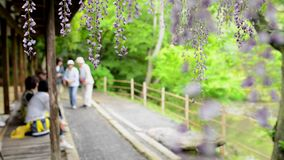 Het latwerk van de Wisteriatunnel in tuin in Kyushu, Japan stock video