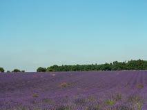 Het lavendelgebied Royalty-vrije Stock Fotografie