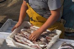 Het leegmaken van de visser vangst Stock Foto