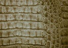 Het leertextuur van de krokodil Stock Fotografie