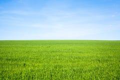 Het lege Gebied van het Gras Royalty-vrije Stock Afbeelding