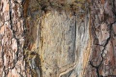 Het lege kader sneed op een schors van de boomboomstam, exemplaarruimte, close-upmening royalty-vrije stock afbeelding
