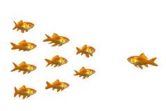 Het leiden van goudvis Stock Afbeelding