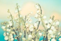 Het lelietje-van-dalen van de bloem Stock Afbeeldingen