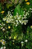 Het lelietje-van-dalen van de lente Stock Fotografie