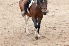 Het leren Horseback het Berijden De instructeur onderwijst tiener Ruiter stock fotografie