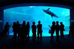 Het letten op dolfijnNagoya aquarium Royalty-vrije Stock Fotografie