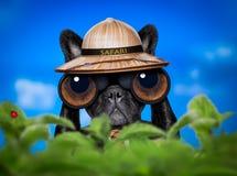 Het letten op hond met verrekijkers royalty-vrije stock afbeeldingen