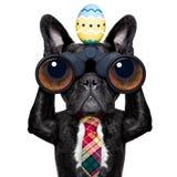 Het letten op hond met verrekijkers in Pasen stock foto