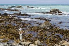 Het letten op op zeewieren tijdens een eb Stock Foto