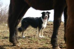 Het letten op paarden Stock Foto's
