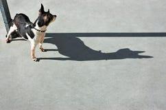 Hond het Letten op Hond stock afbeelding